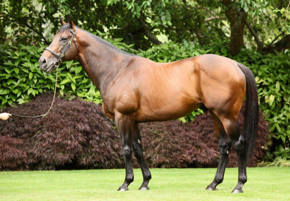 http://www.stallions.com.au/wp-content/uploads/2019/09/fr-1.jpg
