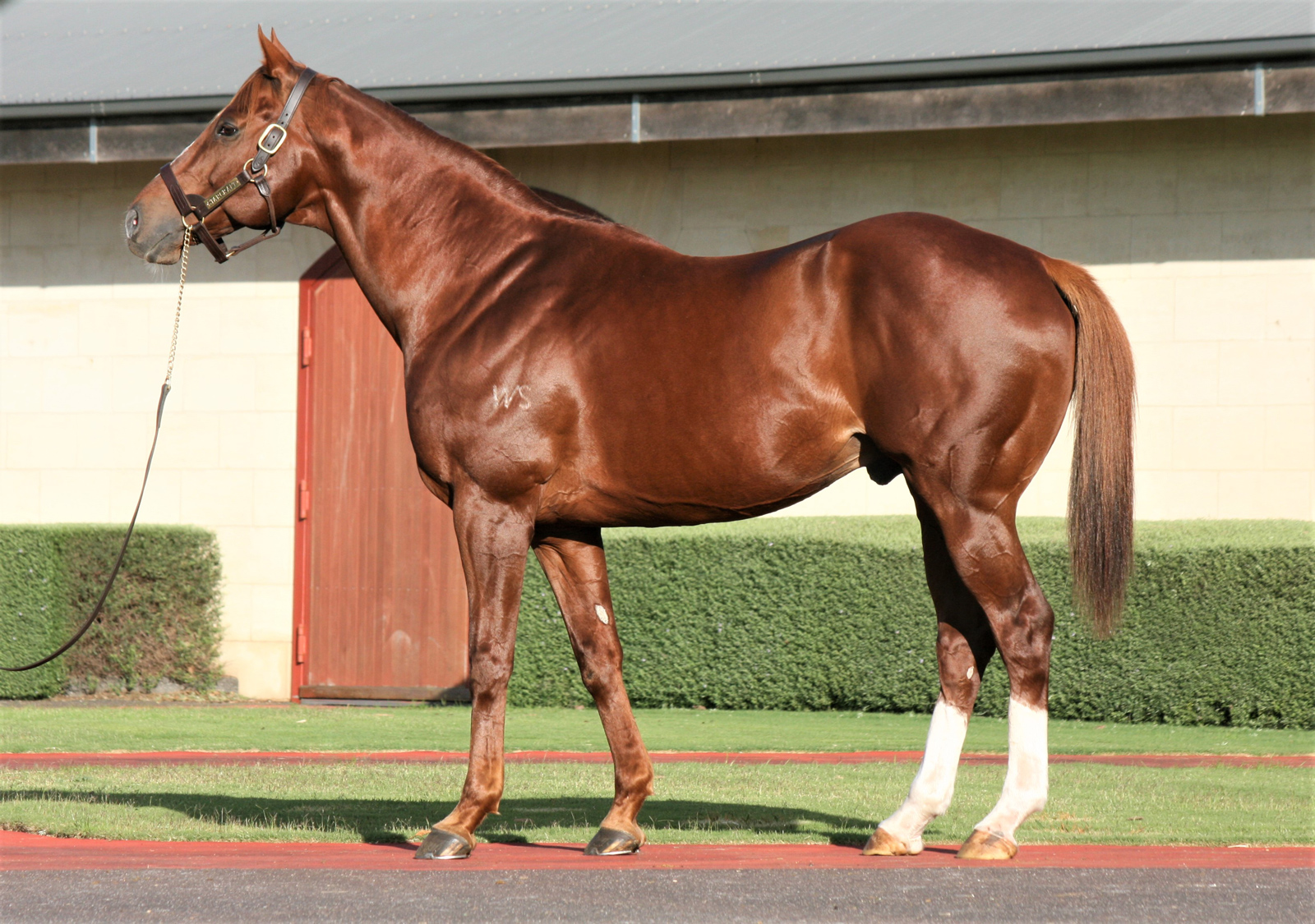 http://www.stallions.com.au/wp-content/uploads/2019/10/102381715.jpg