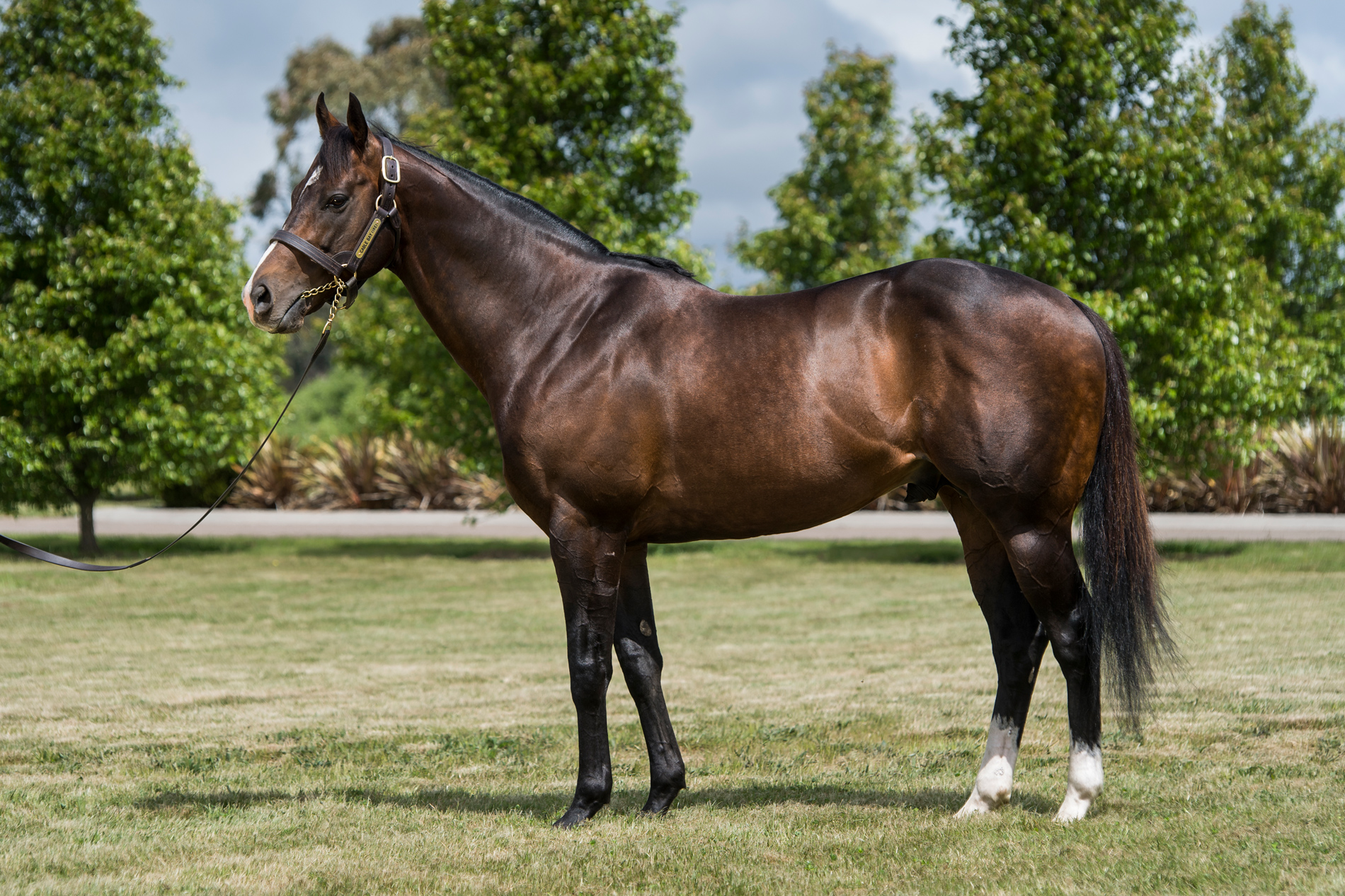 http://www.stallions.com.au/wp-content/uploads/2019/10/Cable-Bay_High-Res_Conformation.jpg