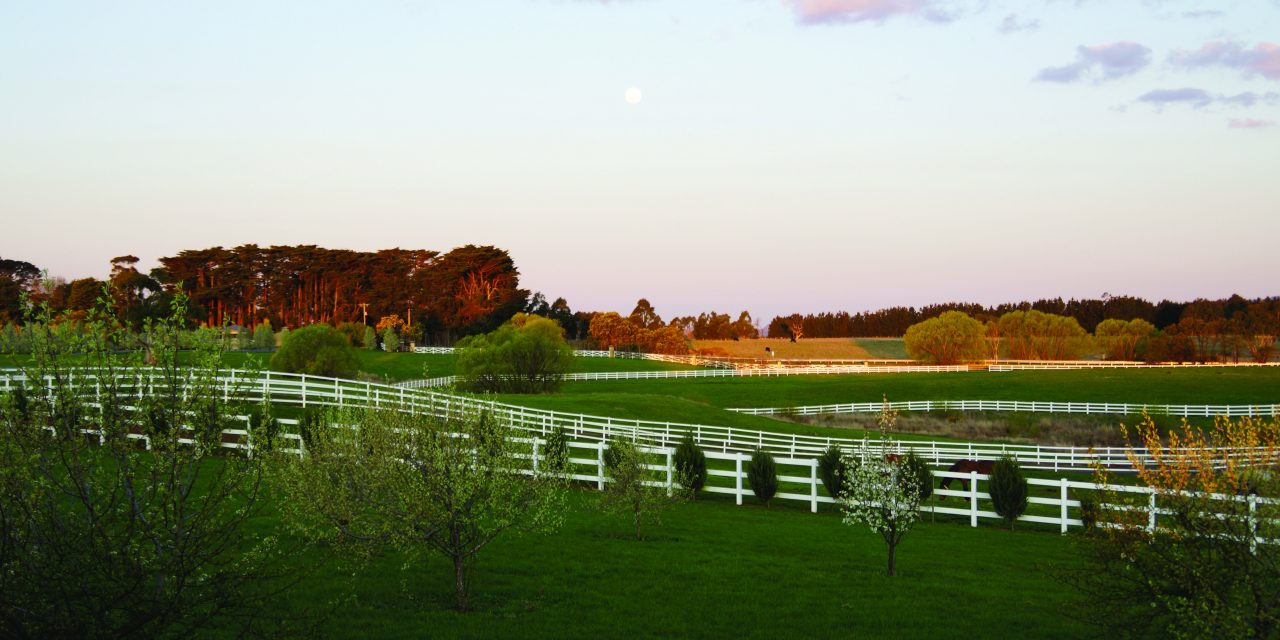 http://www.stallions.com.au/wp-content/uploads/2019/12/078-1280x640.jpg