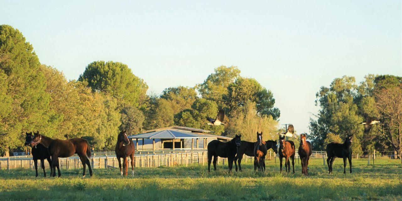 http://www.stallions.com.au/wp-content/uploads/2019/12/DSC06817-3-1280x640.jpg