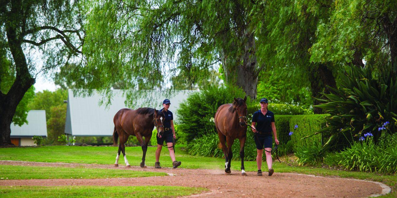 http://www.stallions.com.au/wp-content/uploads/2019/12/Lot187-PoppetsTreasure-Lot269-Samaready-12082017-0826-1280x640.jpg