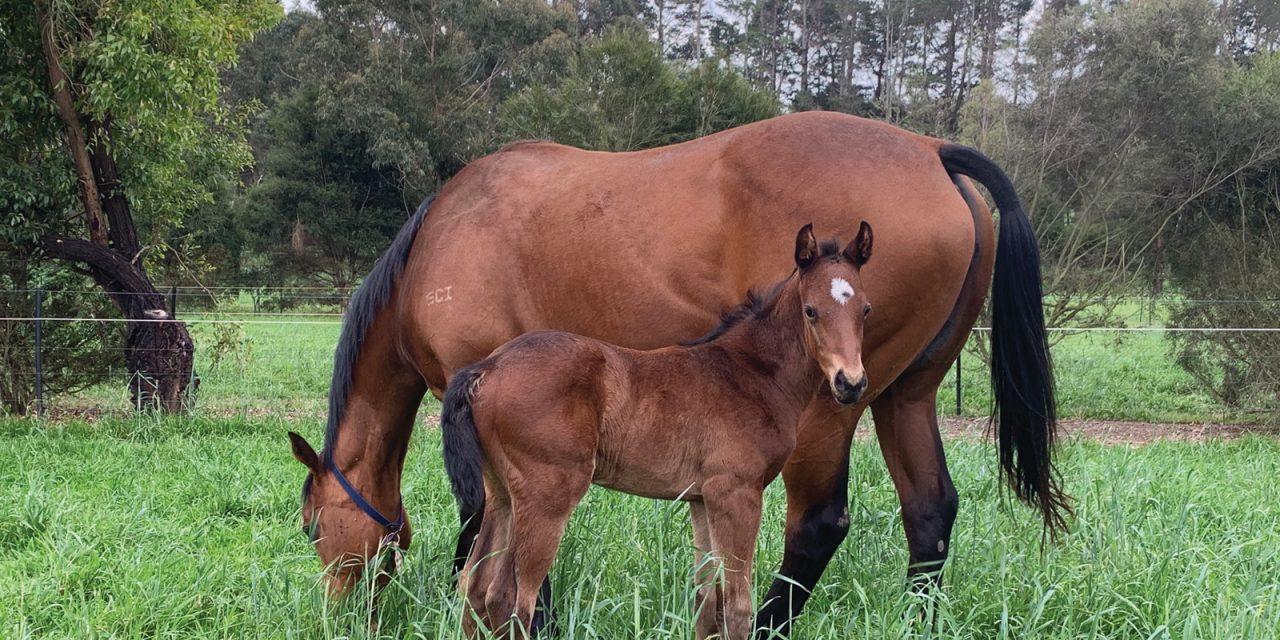 http://www.stallions.com.au/wp-content/uploads/2019/12/Rheinwood_2401-1280x640.jpg