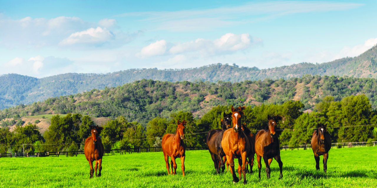 http://www.stallions.com.au/wp-content/uploads/2019/12/Yearlings-Segenhoe-20191022-3522-1280x640.jpg
