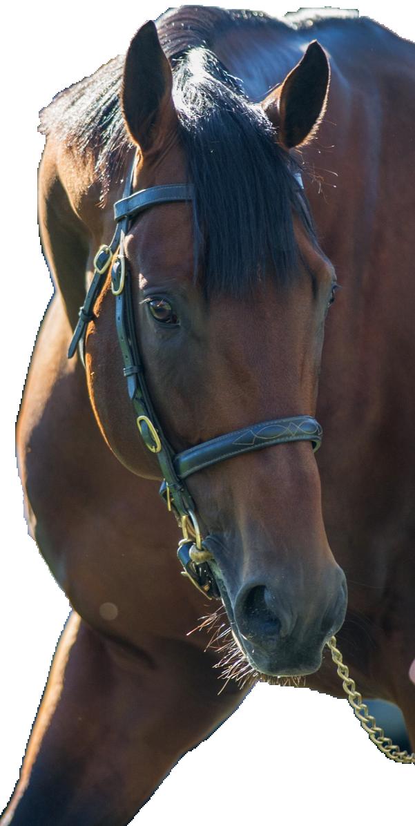 http://www.stallions.com.au/wp-content/uploads/2020/02/freshman-sire.png