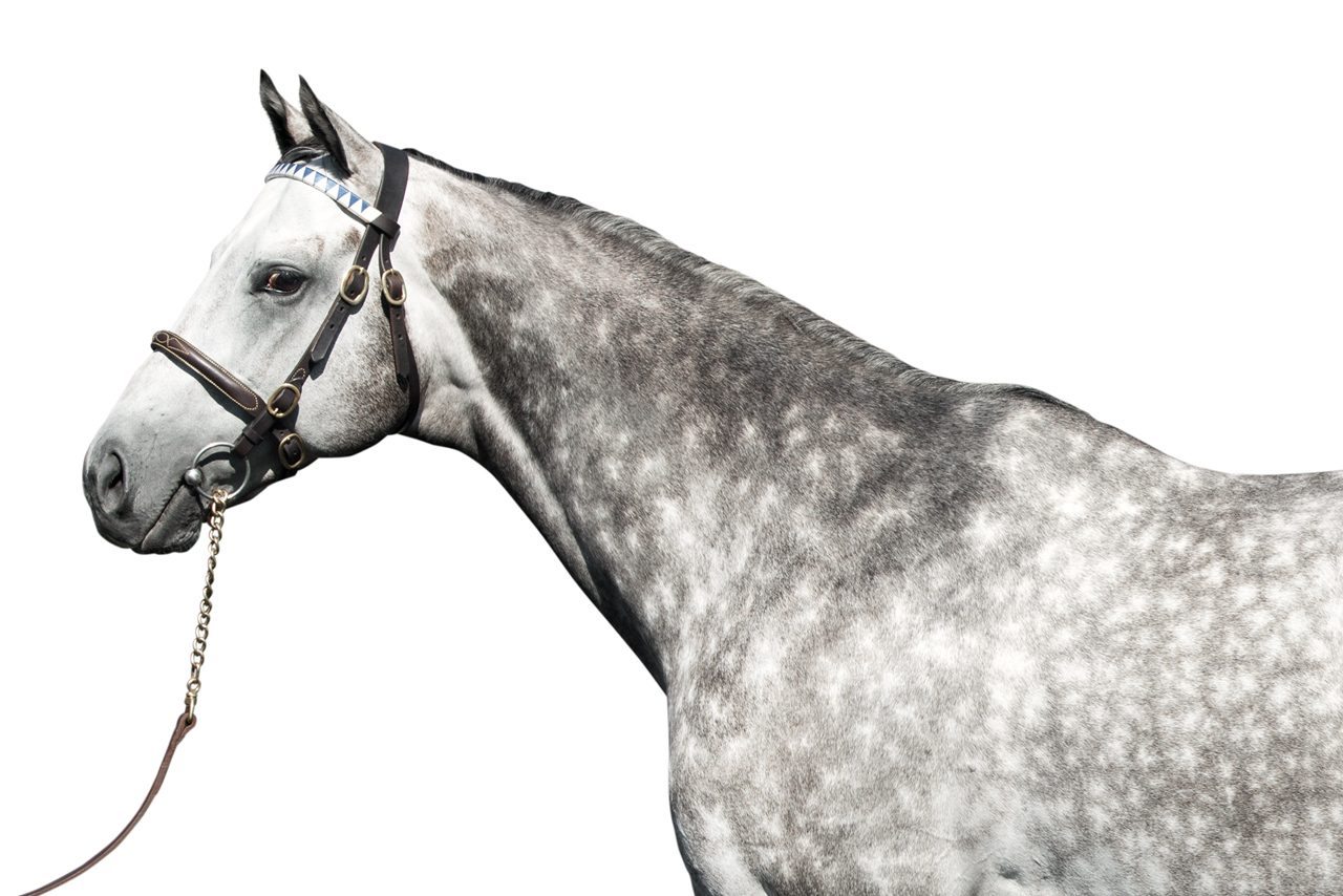 http://www.stallions.com.au/wp-content/uploads/2020/02/frosted-1280x854.jpg