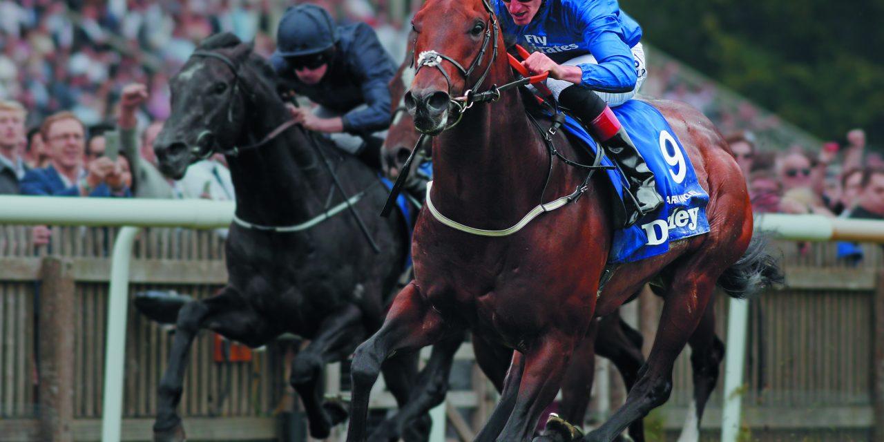 http://www.stallions.com.au/wp-content/uploads/2020/03/HarryAngel-1280x640.jpg