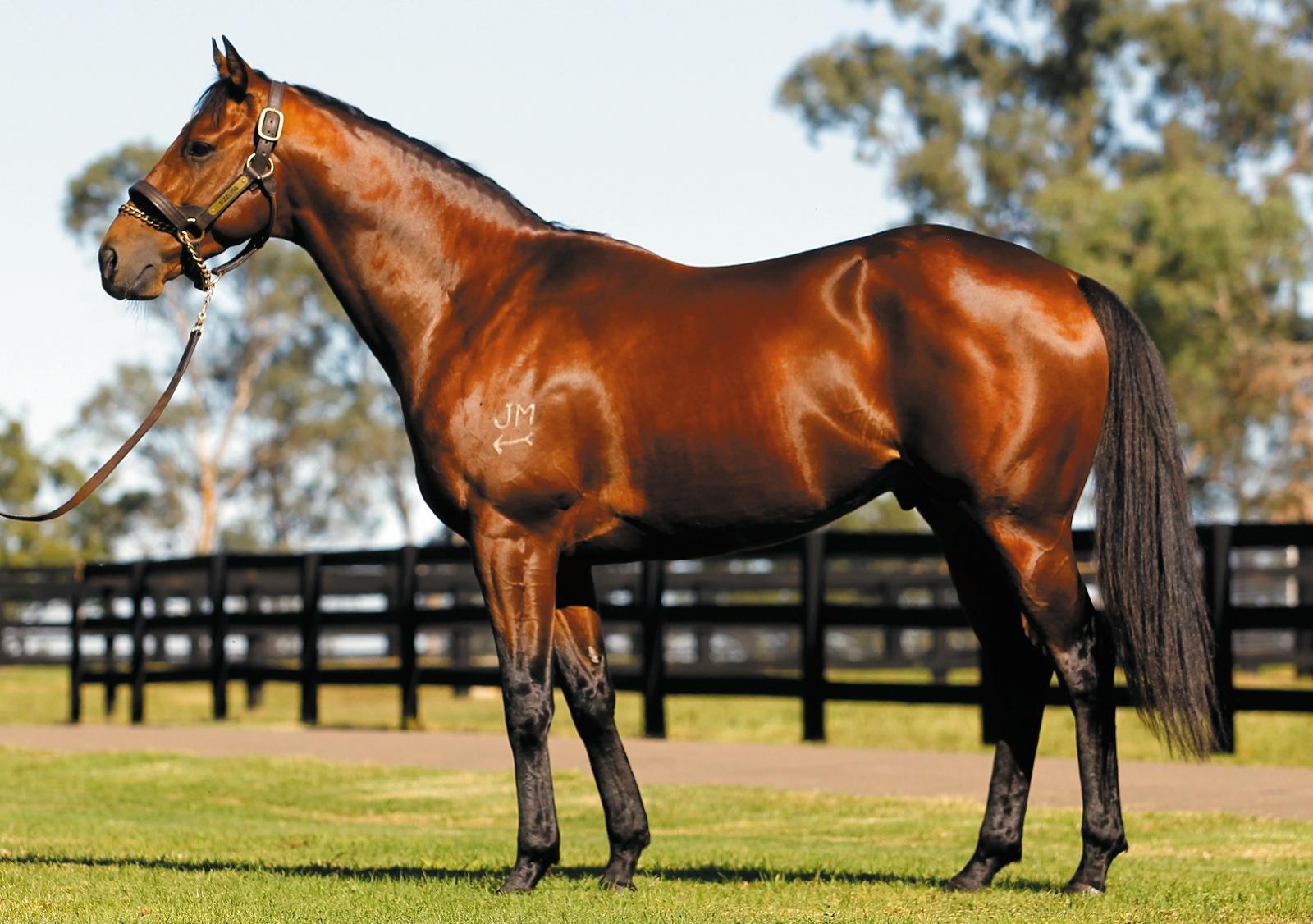 https://www.stallions.com.au/wp-content/uploads/2019/09/103841418.jpg