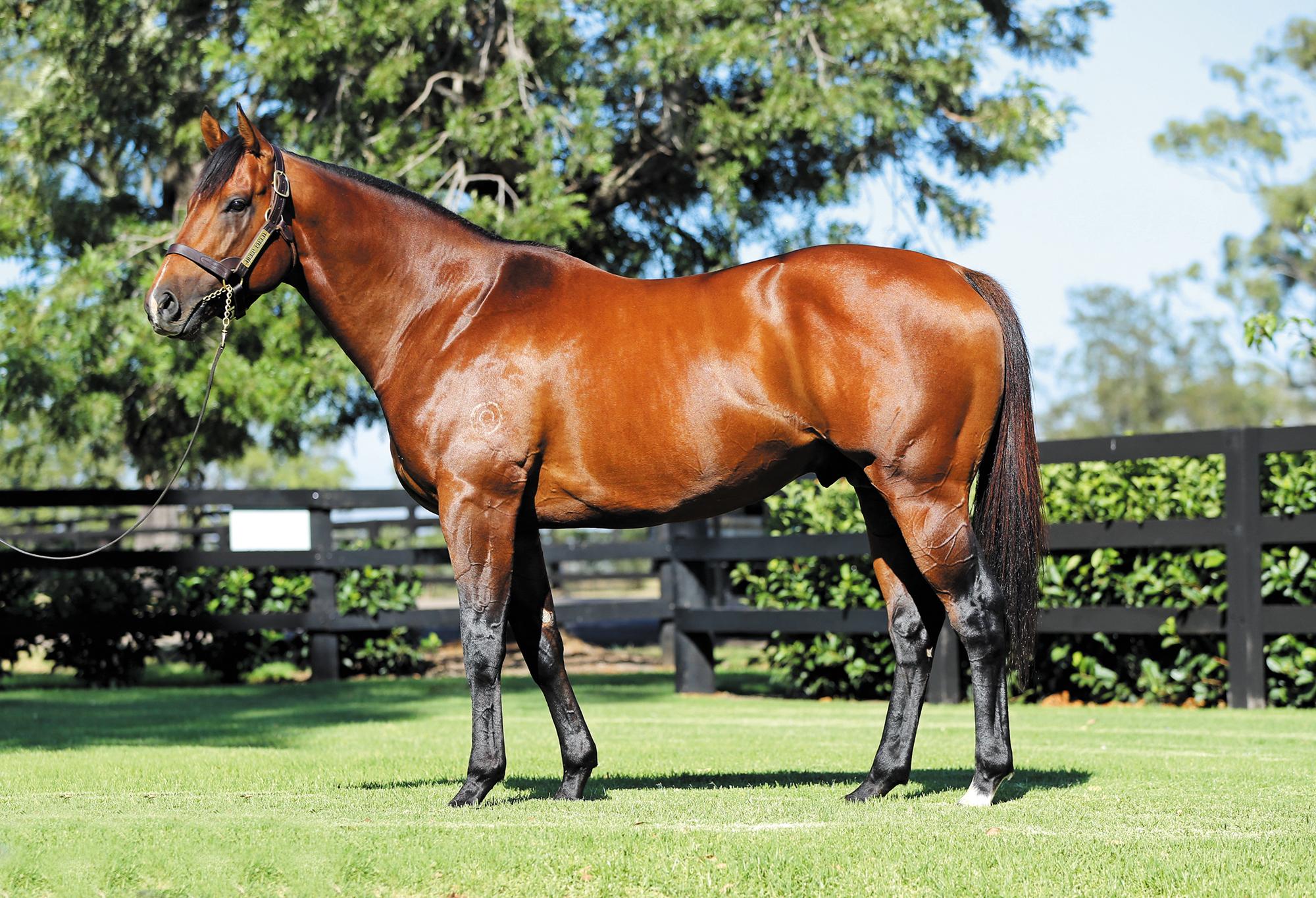 https://www.stallions.com.au/wp-content/uploads/2019/09/103947713.jpg