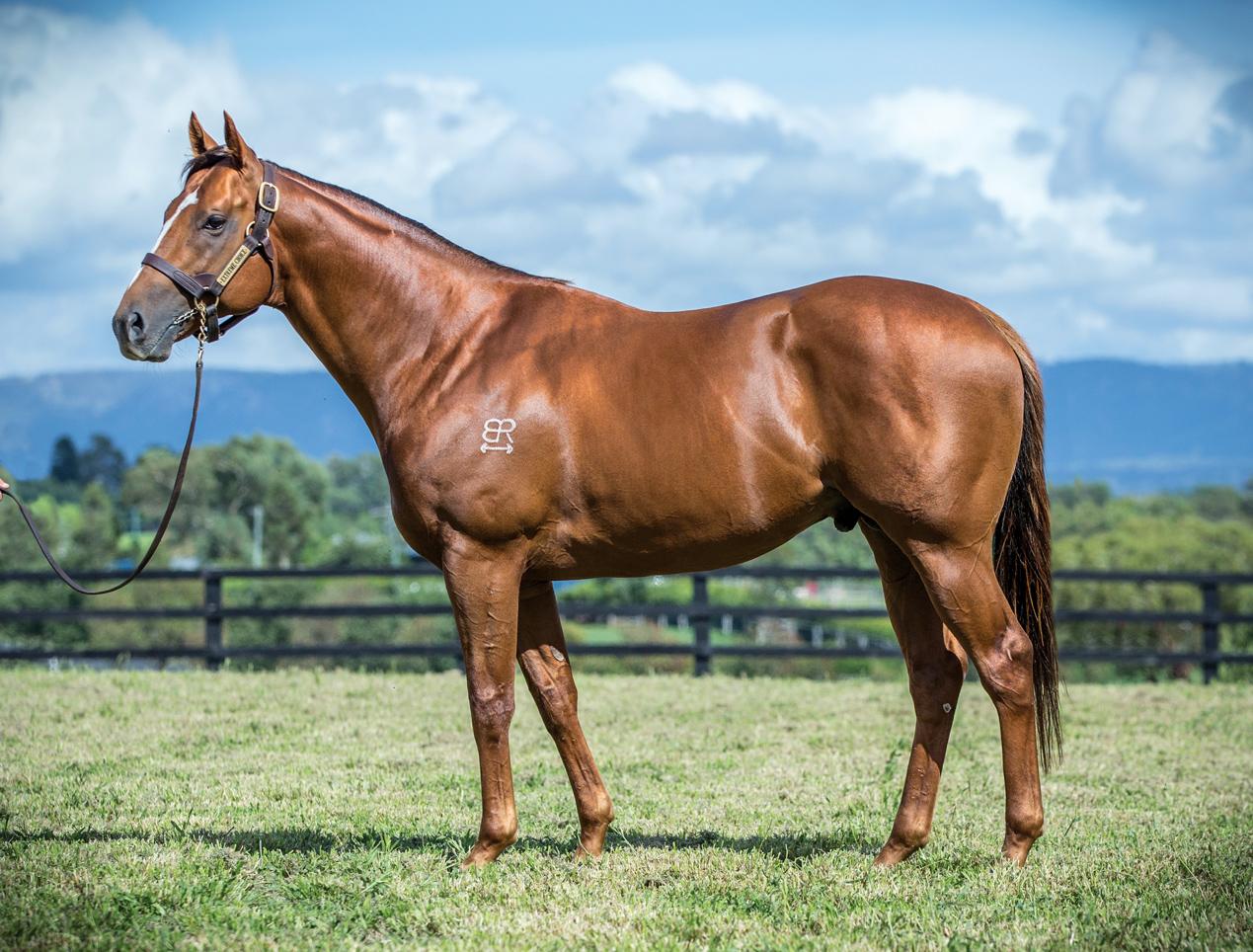 https://www.stallions.com.au/wp-content/uploads/2019/09/104305519.jpg