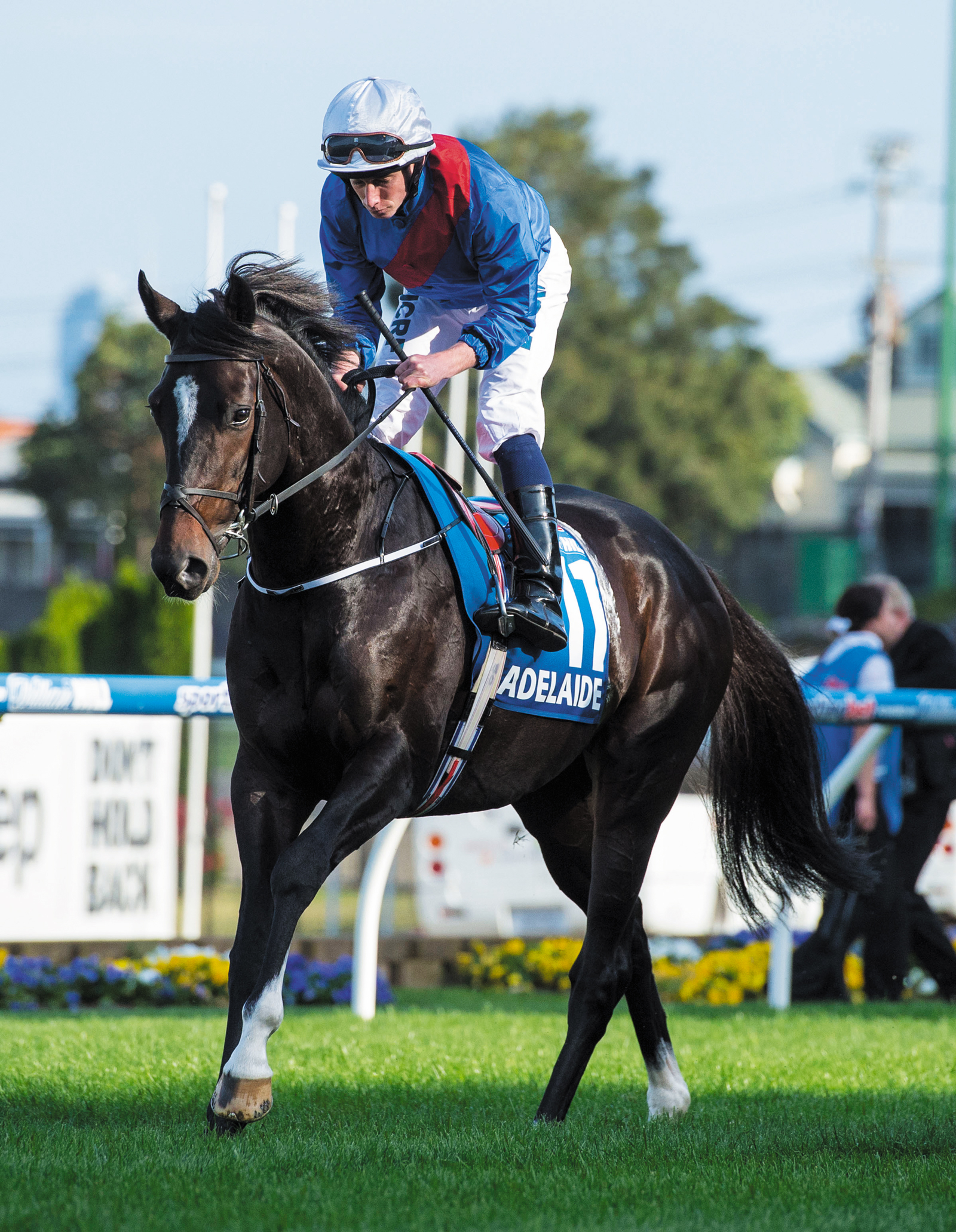 https://www.stallions.com.au/wp-content/uploads/2019/09/Adelaide.jpg