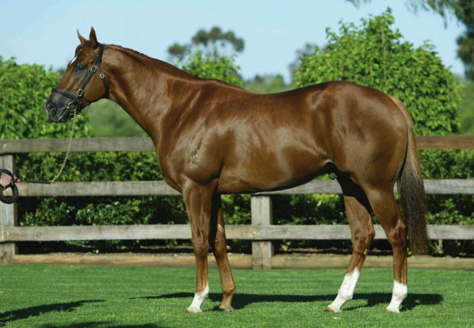 https://www.stallions.com.au/wp-content/uploads/2019/09/Choisir-1.jpg
