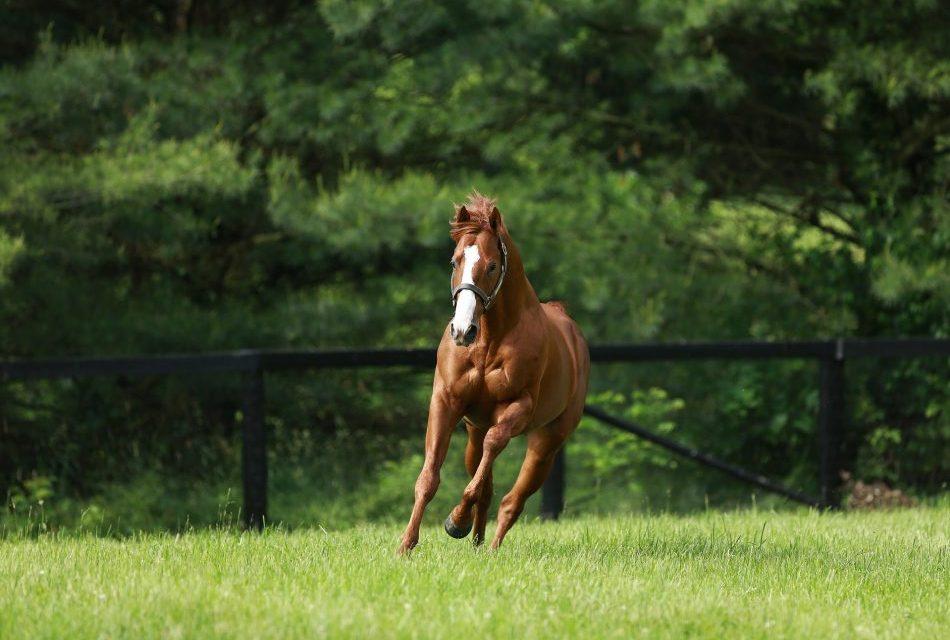 https://www.stallions.com.au/wp-content/uploads/2019/09/Justify-paddock-web-950x640.jpg