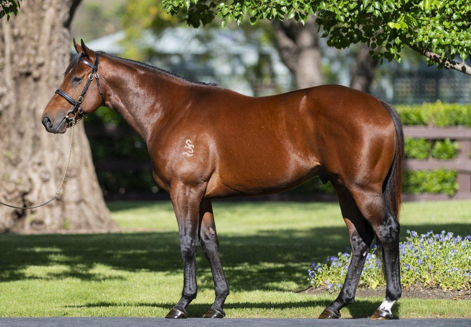 https://www.stallions.com.au/wp-content/uploads/2019/09/MerchantNavy-Conformation-20181031-1156.jpg