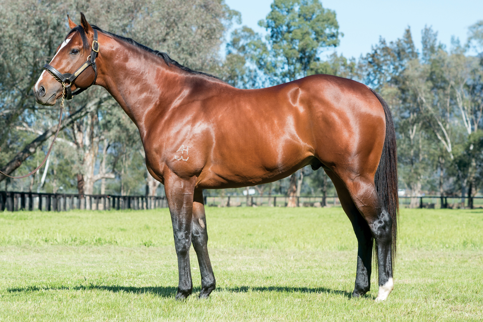https://www.stallions.com.au/wp-content/uploads/2019/09/Outreach_2017-web.jpg