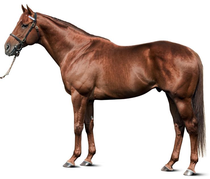 https://www.stallions.com.au/wp-content/uploads/2019/09/STREET-BOSS-conformation.jpg