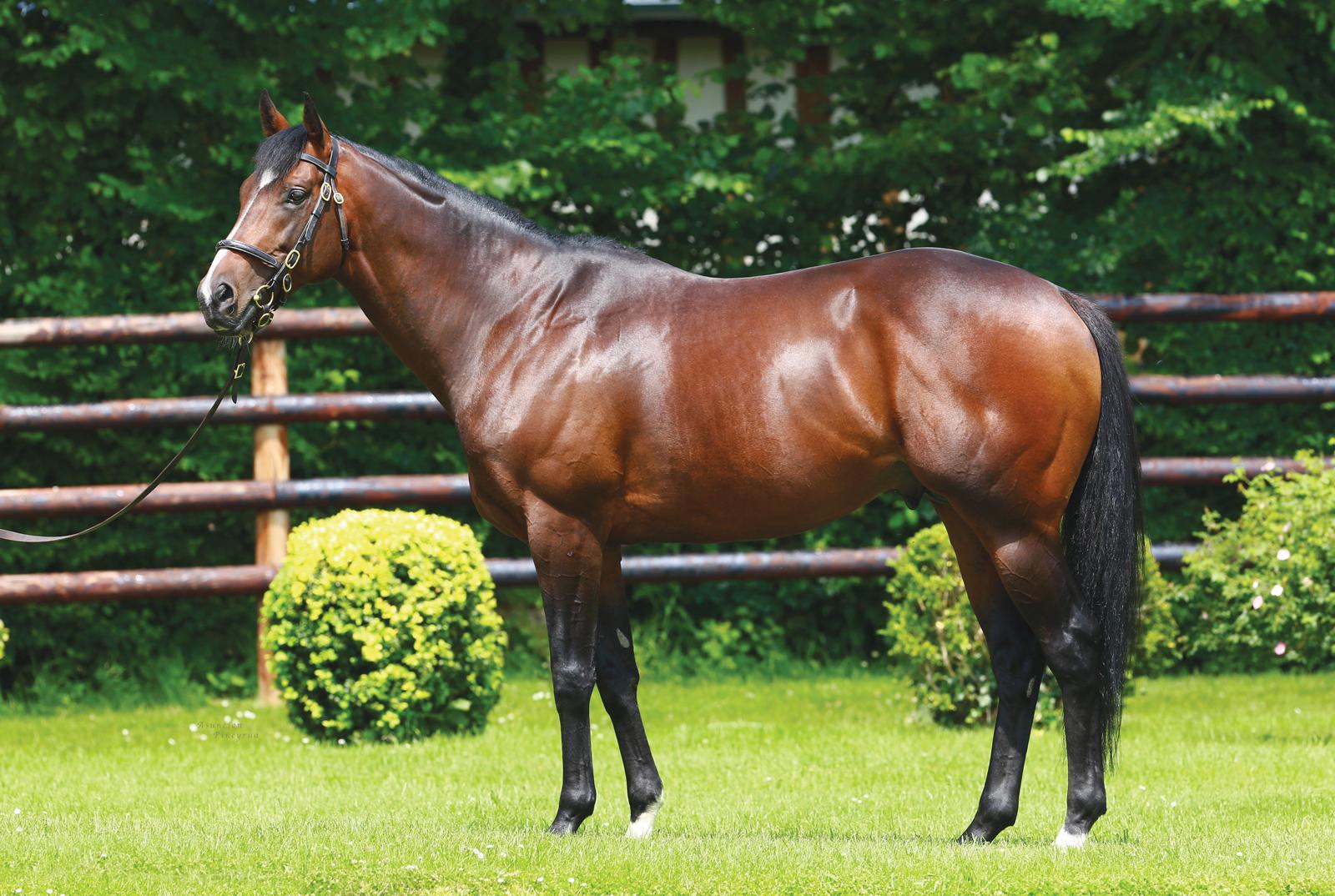 https://www.stallions.com.au/wp-content/uploads/2019/09/Shalaa-conformation_2018-web.jpg