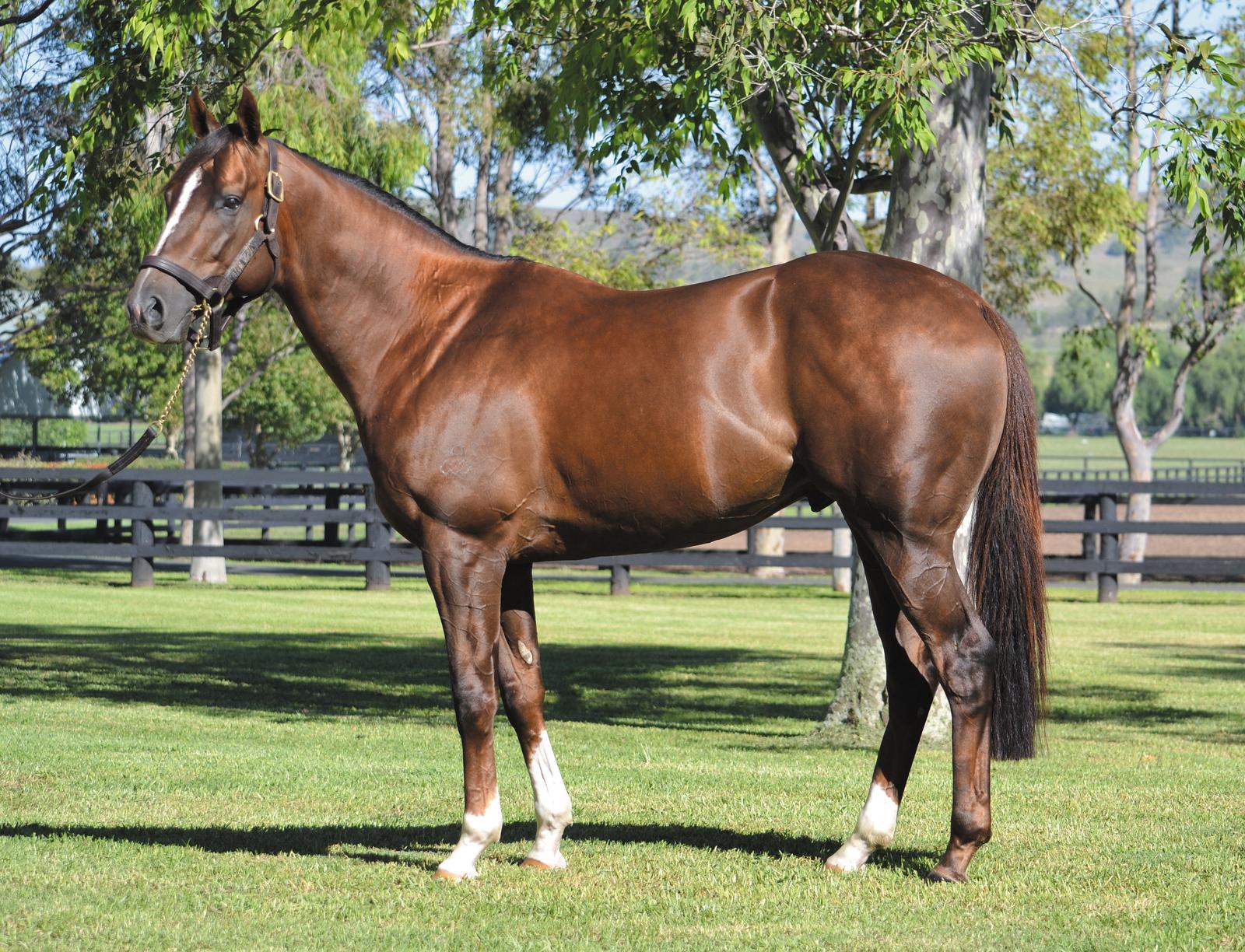 https://www.stallions.com.au/wp-content/uploads/2019/09/Showtime_2019-web.jpg