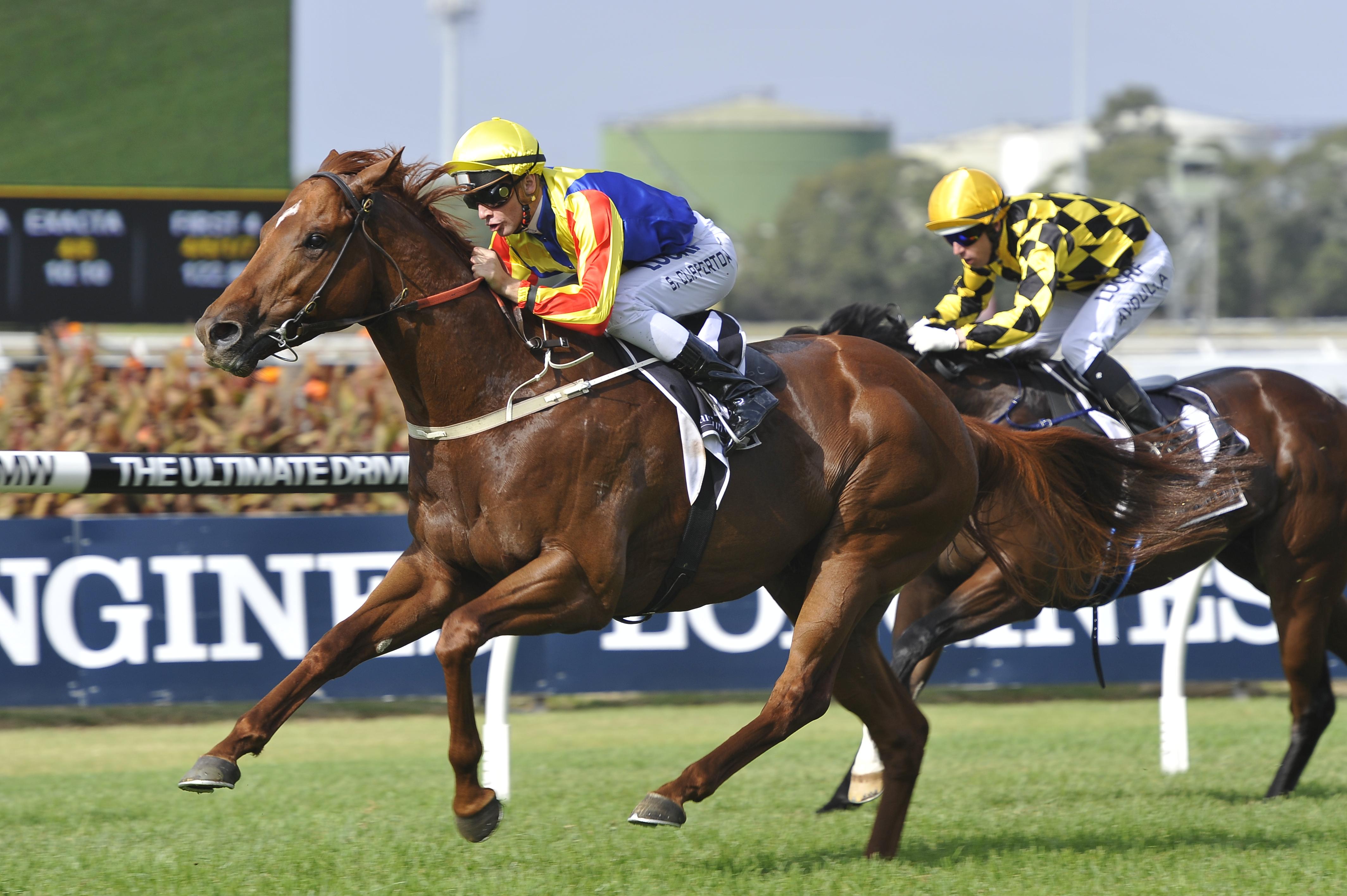 https://www.stallions.com.au/wp-content/uploads/2019/09/Spieth-210516-6456.jpg