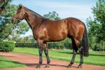 Winners mark a milestone for young sires