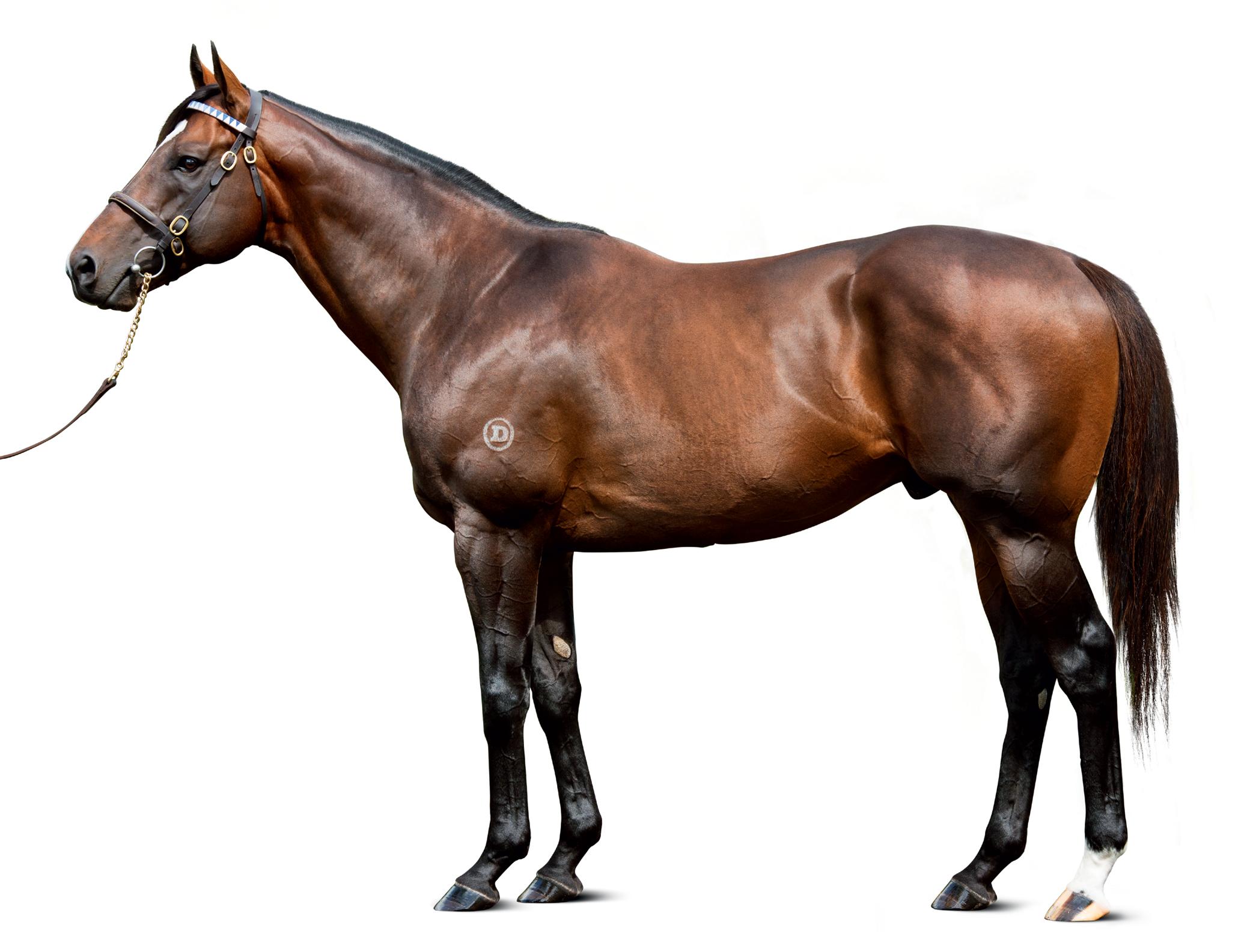 https://www.stallions.com.au/wp-content/uploads/2019/09/conf_astern_0879-rte_thoroughbred_stallion.jpg