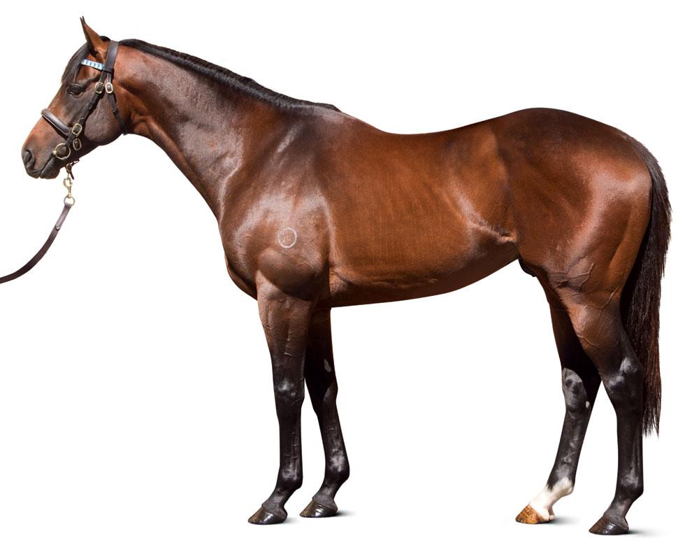 https://www.stallions.com.au/wp-content/uploads/2019/09/conf_epaulette_25_11_13.jpg