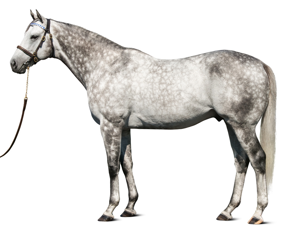 https://www.stallions.com.au/wp-content/uploads/2019/09/conf_frosted_thoroughbred_stallion.jpg