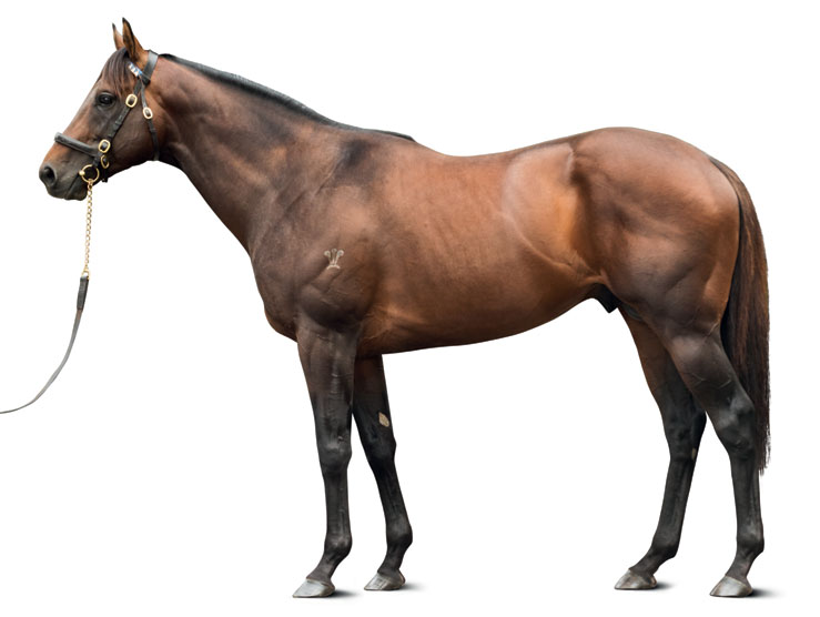 https://www.stallions.com.au/wp-content/uploads/2019/09/conf_kermadec_kp-_138-_thoroughbred_stallion.jpg