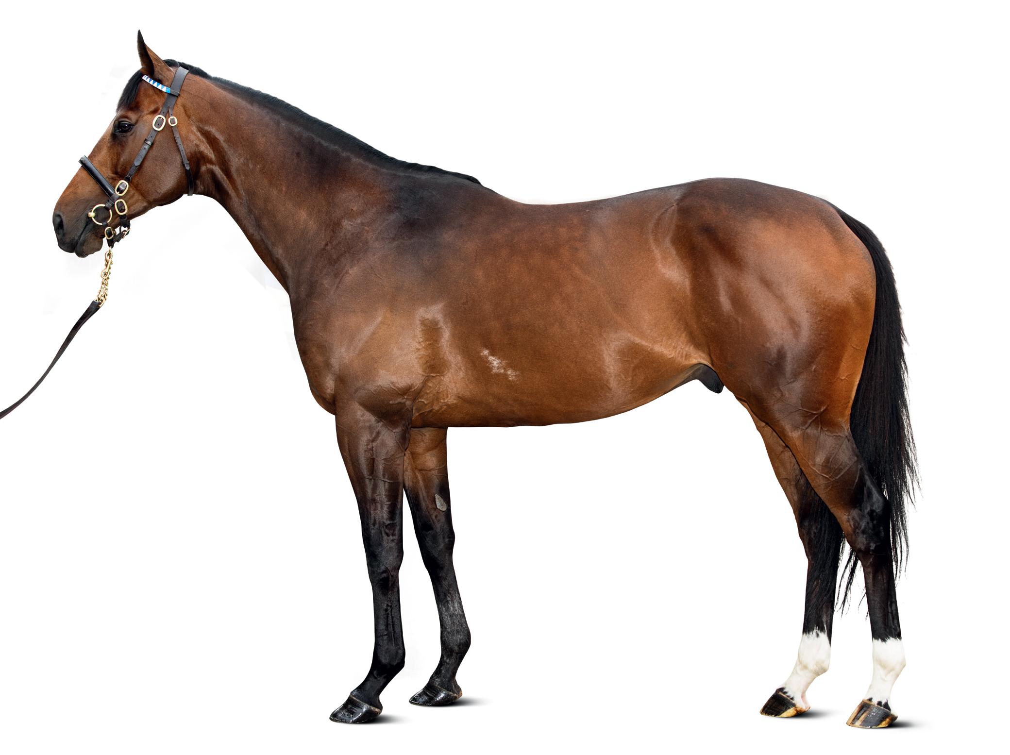https://www.stallions.com.au/wp-content/uploads/2019/09/conf_ribchester_mr_0190-r_thoroughbred_stallion.jpg