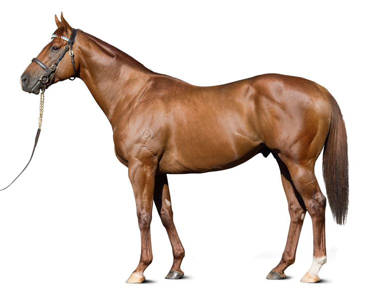 https://www.stallions.com.au/wp-content/uploads/2019/09/conf_shooting_to_win_kp3572_thoroughbred_stallion.jpg