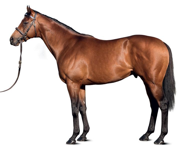 https://www.stallions.com.au/wp-content/uploads/2019/09/conf_territories_al-19_thoroughbred_stallion.jpg