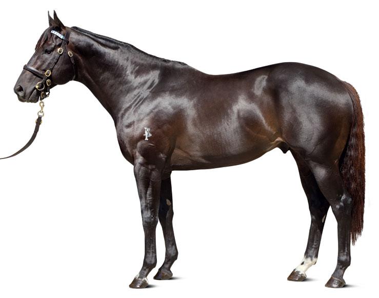 https://www.stallions.com.au/wp-content/uploads/2019/09/conformation_Brazen_Beau_0119_thoroughbred_stallions.jpg