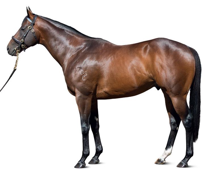 https://www.stallions.com.au/wp-content/uploads/2019/09/conformation_Hallowed_Crown_0027_thoroughbred_stallions.jpg