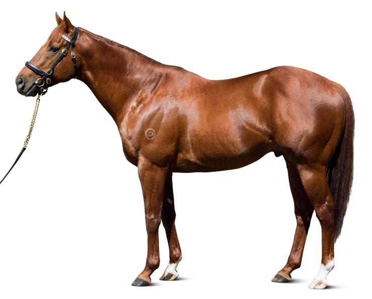 https://www.stallions.com.au/wp-content/uploads/2019/09/conformation_Sepoy_0017_thoroughbred_stallions.jpg