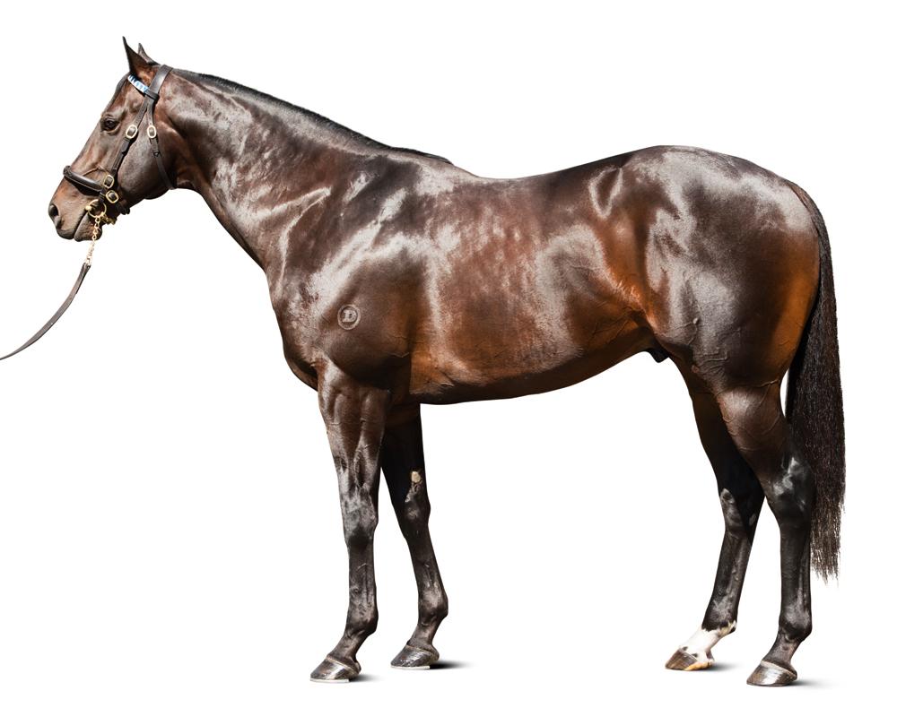 https://www.stallions.com.au/wp-content/uploads/2019/09/exospher_16_12_13_cn_kp_10.jpg
