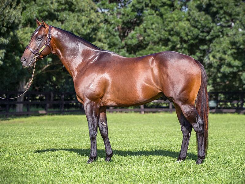 https://www.stallions.com.au/wp-content/uploads/2019/09/stallion_800_2.jpg