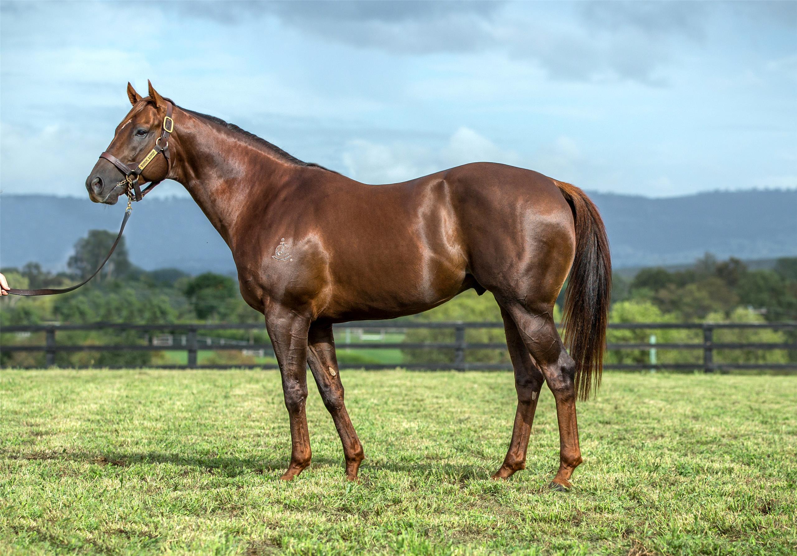 https://www.stallions.com.au/wp-content/uploads/2019/09/winning_rupert_1_resized4-9-2018-9-16-59-201.jpg