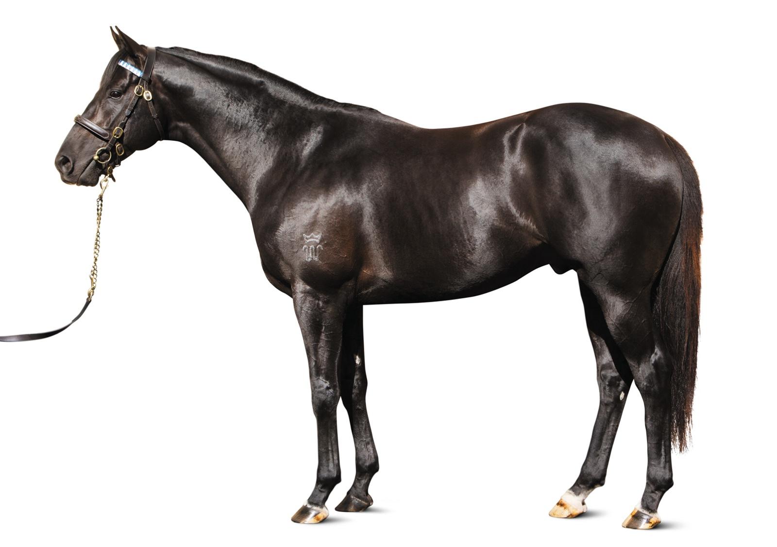 https://www.stallions.com.au/wp-content/uploads/2019/10/103553100.jpg