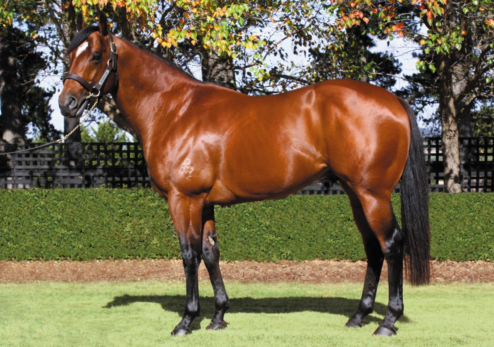 https://www.stallions.com.au/wp-content/uploads/2019/10/103553557.jpg