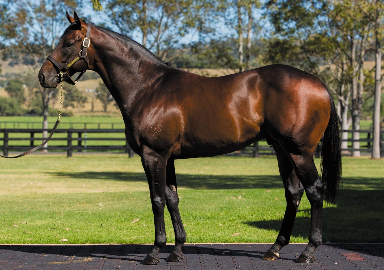 https://www.stallions.com.au/wp-content/uploads/2019/10/103675609.jpg