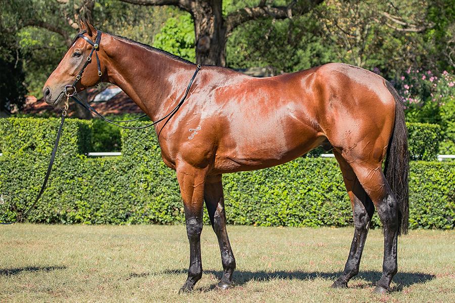 https://www.stallions.com.au/wp-content/uploads/2019/10/104672675.jpg