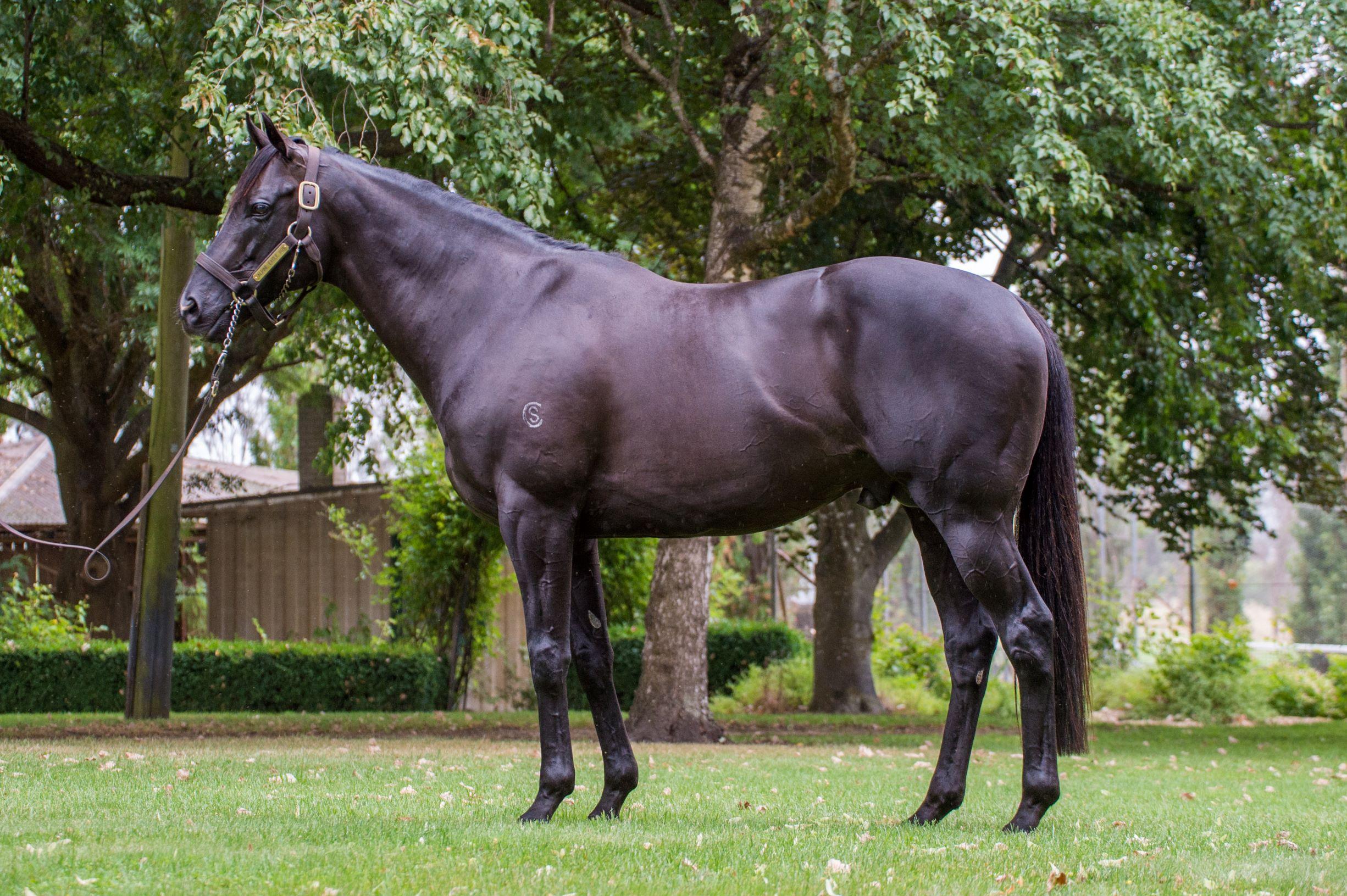 https://www.stallions.com.au/wp-content/uploads/2019/10/Armidale-Alpine-Eagle-Conformation_06-02-19-Sharon-Lee-Chapman_0588-4MP.jpg