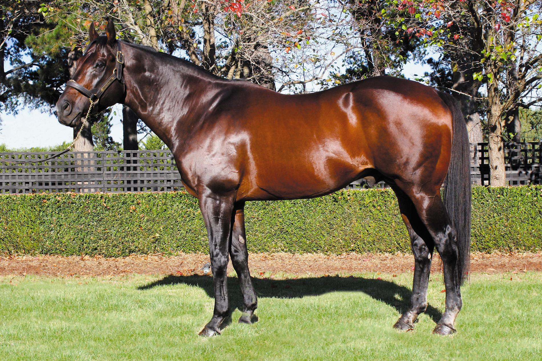 https://www.stallions.com.au/wp-content/uploads/2019/10/Bel-Esprit_edited_2015-WEB.jpg