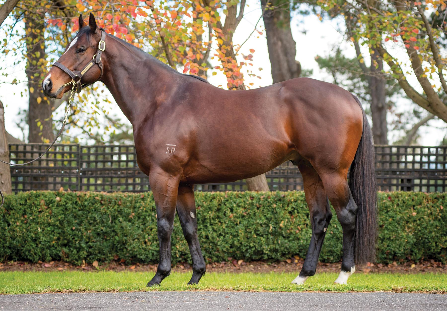 https://www.stallions.com.au/wp-content/uploads/2019/10/FIGHTING-SUN_2017-WEB.jpg