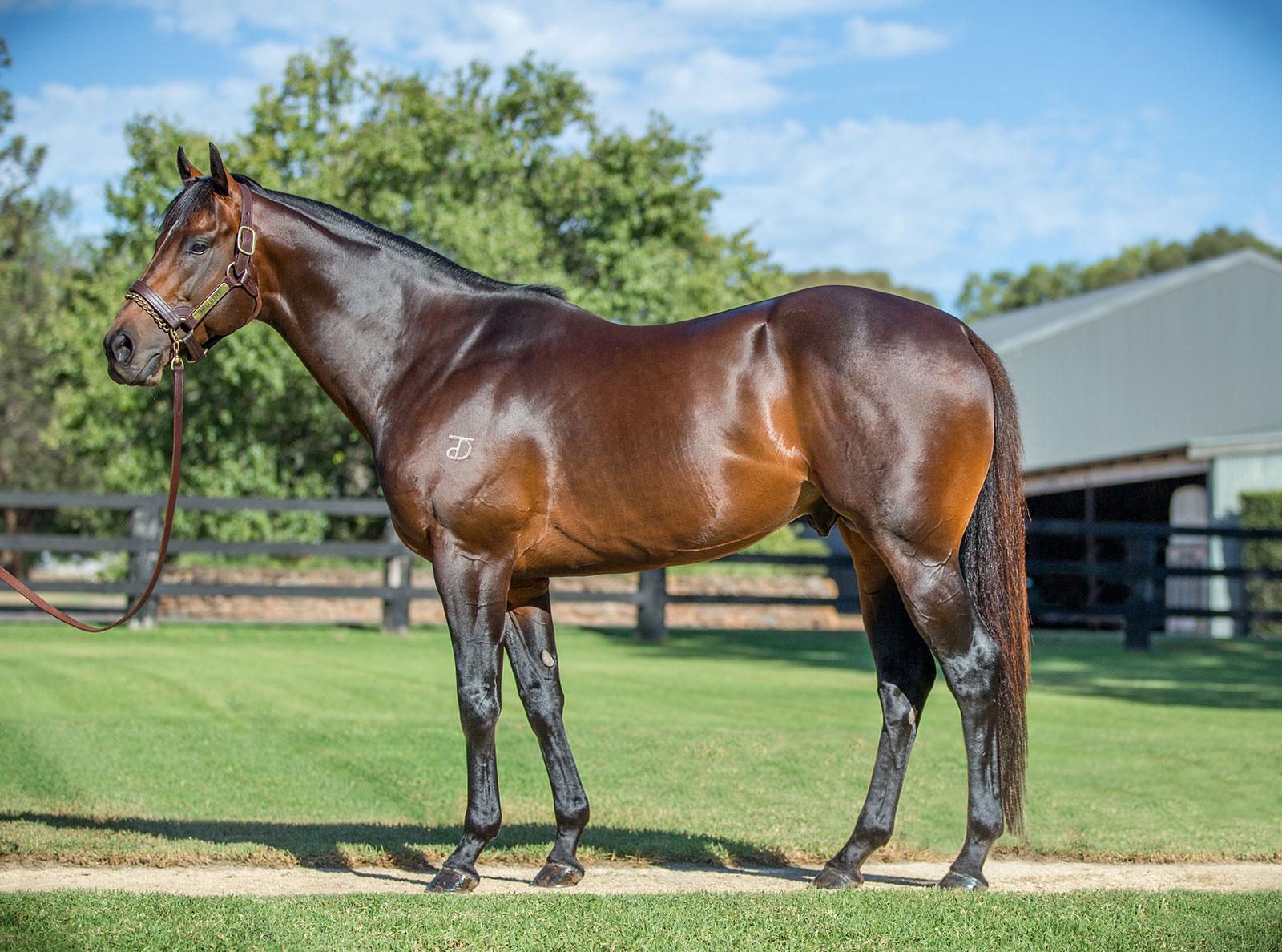 https://www.stallions.com.au/wp-content/uploads/2019/10/hellbent_3e_19.jpg