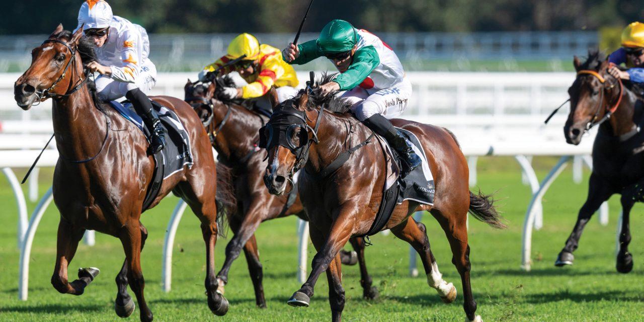 https://www.stallions.com.au/wp-content/uploads/2019/12/Catelvecchio-ParrJoshua-20190420-8462-1280x640.jpg