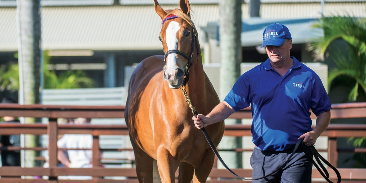 https://www.stallions.com.au/wp-content/uploads/2019/12/Lot-478-Choisir-x-Couredge-Filly-Tyreel_10-01-19-MM-GC-SLC_0821-1280x640.jpg