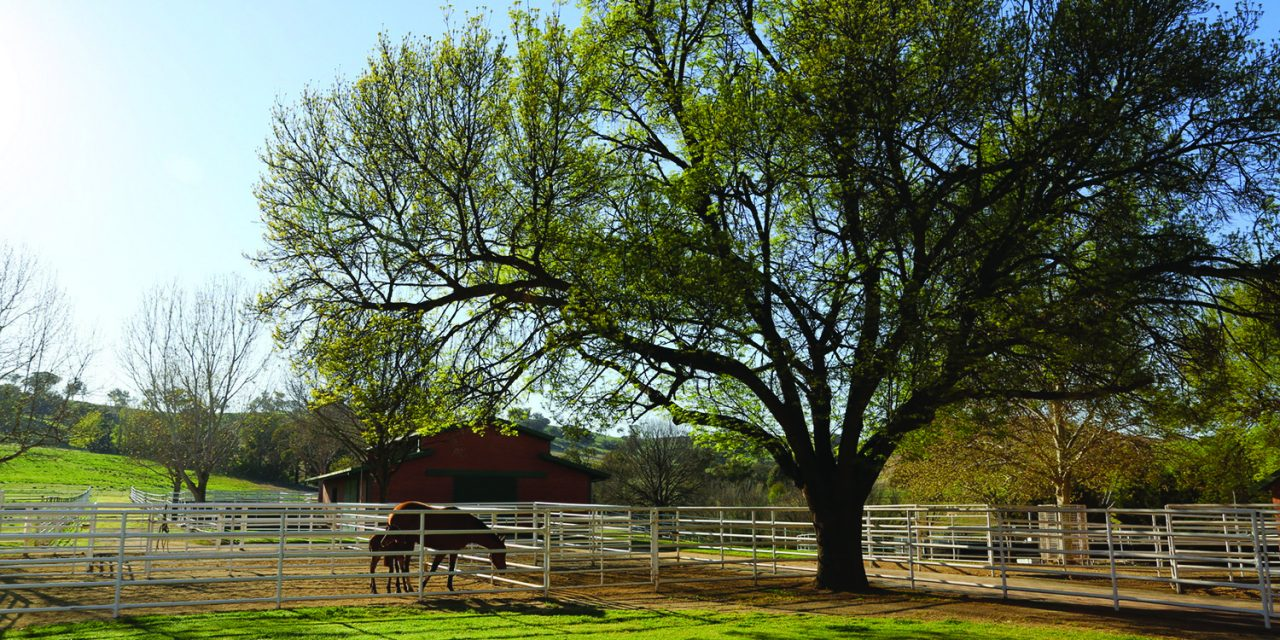 https://www.stallions.com.au/wp-content/uploads/2019/12/Newhaven-005-HR-1280x640.jpg