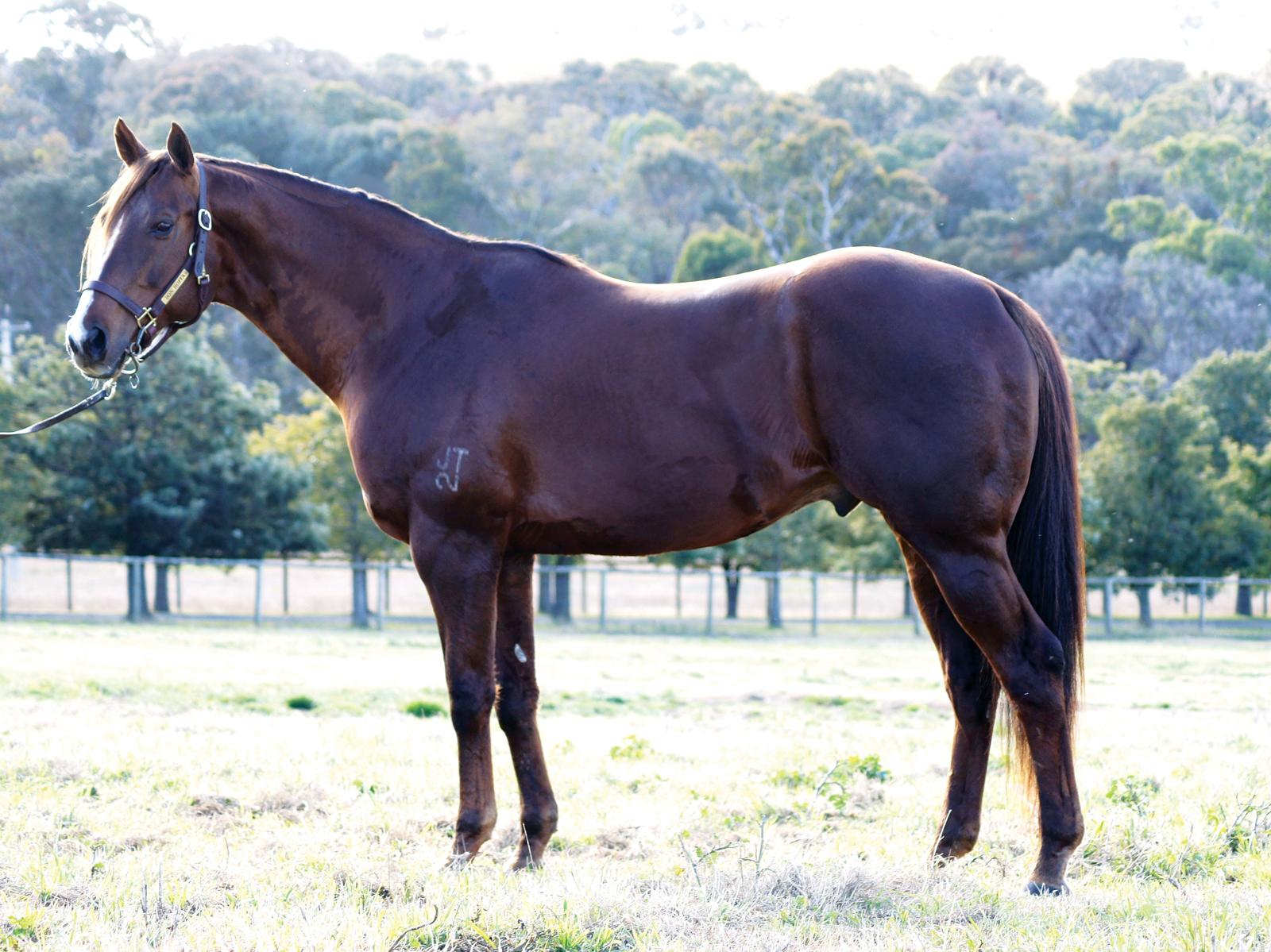 https://www.stallions.com.au/wp-content/uploads/2020/01/Bon_Hoffa_2019.jpg