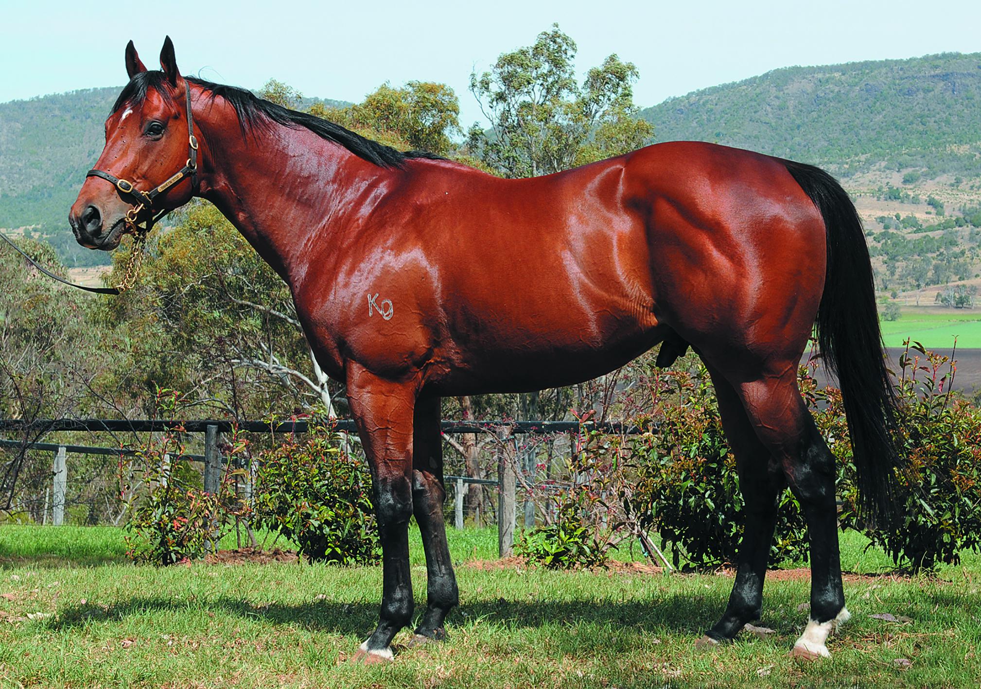 https://www.stallions.com.au/wp-content/uploads/2020/01/Golden-Archer_AAedit_2015.jpg